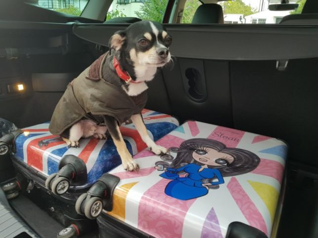 Sloan reviews the all-new ŠKODA KAROQ… with a little help from Puppy Gizmo!