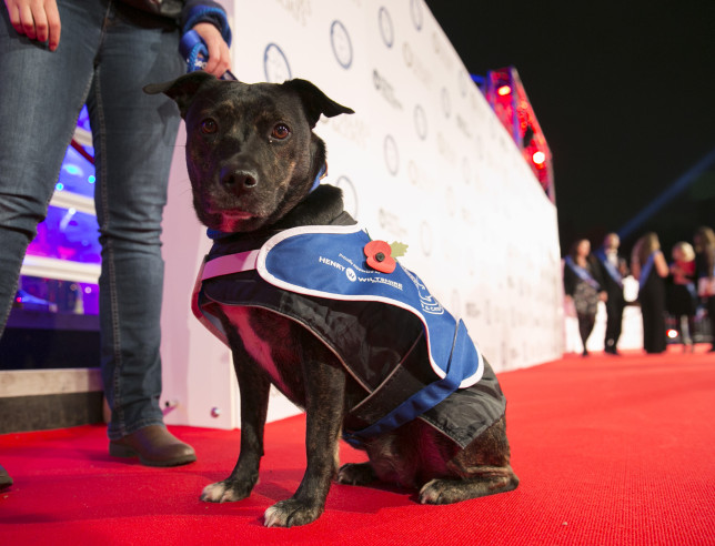 Battersea dog on the red carpet