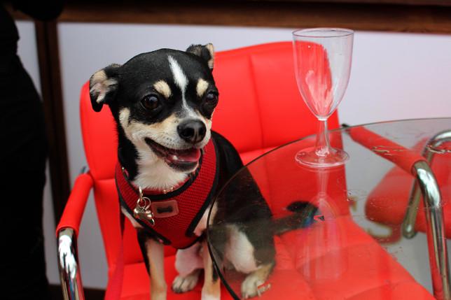 Gizmo enjoys a tipple... of Snuffle Dog Beer