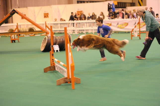 National Pet Show 2015 (13)