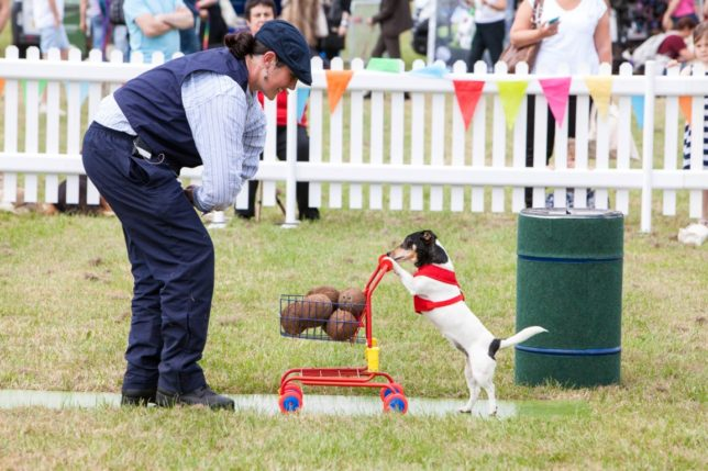 Dogfest 2015 at Loseley Park, Surrey