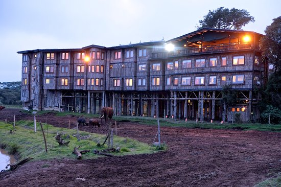 treetops-hotel-kenya