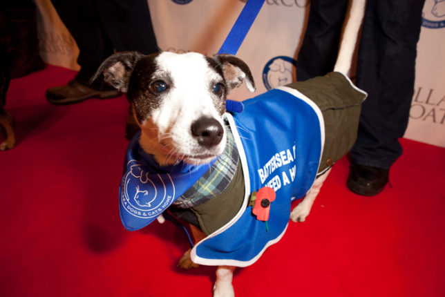 Photo credit: David Baird/Battersea Dogs & Cats Home